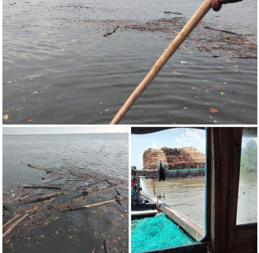 Nelayan Tak Bisa Menjaring, Ratusan Kayu Akasia Diduga Milik PT RAPP Berserakan di Perairan Meranti